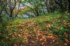 Βουνά και φύλλα στοκ εικόνες