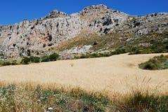 Βουνά καρστ και τομέας σίτου, Ισπανία Στοκ εικόνες με δικαίωμα ελεύθερης χρήσης