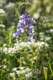 βουνά λουλουδιών Στοκ εικόνες με δικαίωμα ελεύθερης χρήσης