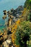 Βουνά με τα κίτρινα λουλούδια Στοκ φωτογραφία με δικαίωμα ελεύθερης χρήσης