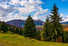 Βουνά με το ζωηρόχρωμο φύλλωμα στο δάσος κωνοφόρων Στοκ Εικόνες