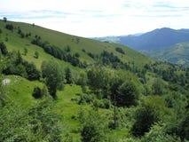 Βουνά ουκρανικά Carpathians Στοκ Εικόνες