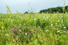 βουνά λουλουδιών Ρωσία, Stavropol Στοκ Φωτογραφίες