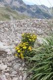 βουνά λουλουδιών Στοκ Εικόνα