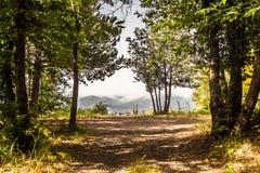 Βουνά πίσω από διασπασμένη στο δάσος Στοκ Εικόνα