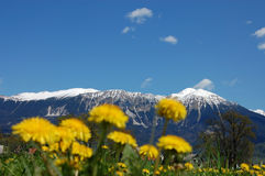 βουνά πικραλίδων Στοκ φωτογραφία με δικαίωμα ελεύθερης χρήσης