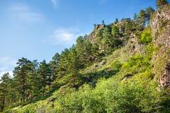 Βουνά που εισβάλλονται με τα δέντρα πεύκων Βουνό Altai, νότιο Si στοκ εικόνα