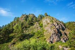Βουνά που εισβάλλονται με τα δέντρα πεύκων Βουνό Altai, νότιο Si στοκ φωτογραφία