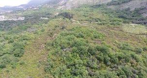 Βουνά που καλύπτονται με το πράσινο δάσος φιλμ μικρού μήκους