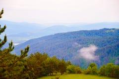 Βουνά που καλύπτονται με το δάσος δέντρων πεύκων Στοκ Φωτογραφίες
