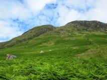 Βουνά που καλύπτονται σκωτσέζικα στη φτέρη Στοκ Εικόνες