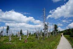 βουνά που περπατούν τη γυ& Στοκ Εικόνες