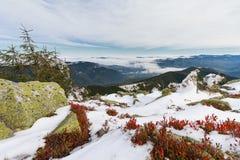 Βουνά, πράσινα gorgany και κόκκινα βακκίνια φύλλων Στοκ Εικόνες