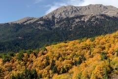 Βουνά στη διακόσμηση φθινοπώρου Στοκ Φωτογραφία