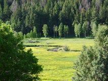 Βουνά της Γιούτα wasatch Στοκ Εικόνες