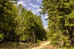 Βουνά της Ρουμανίας Στοκ Εικόνα