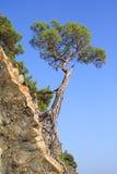 βουνά τοπίων στοκ εικόνες με δικαίωμα ελεύθερης χρήσης