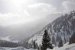 βουνά του Κολοράντο στοκ φωτογραφία