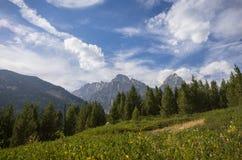 Βουνά του Ουαϊόμινγκ επάνω από έναν τομέα και τα δέντρα Στοκ εικόνες με δικαίωμα ελεύθερης χρήσης