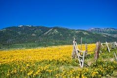 βουνά του Idaho Ιούνιος Στοκ Εικόνα