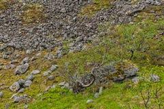 Βουνά Hibiny, χερσόνησος κόλας, Nord, καλοκαίρι, σκοτεινά σύννεφα Στοκ Εικόνες