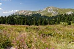 Βουνά Ilgaz, Kastamonu, Τουρκία Στοκ φωτογραφία με δικαίωμα ελεύθερης χρήσης