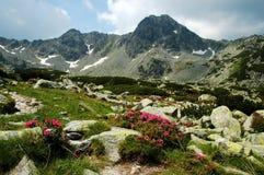 βουνά retezat Ρουμανία Στοκ εικόνα με δικαίωμα ελεύθερης χρήσης