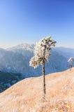 Βουνά Wugong στοκ εικόνα με δικαίωμα ελεύθερης χρήσης