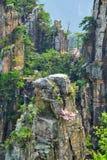 Βουνά Zhangjiajie, Κίνα στοκ εικόνες με δικαίωμα ελεύθερης χρήσης