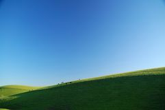 βουνοπλαγιά βοοειδών ηλιόλουστη στοκ φωτογραφίες με δικαίωμα ελεύθερης χρήσης