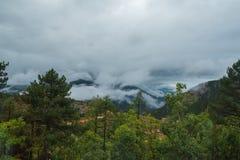 Βουνοπλαγιά που βρίσκεται στο σύννεφο με τα αειθαλή κωνοφόρα που τυλίγονται στην υδρονέφωση κατά μια φυσική άποψη τοπίων Στοκ Εικόνες