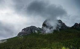 Βουνοπλαγιά που βρίσκεται στο σύννεφο με τα αειθαλή κωνοφόρα που τυλίγονται στην υδρονέφωση κατά μια φυσική άποψη τοπίων Στοκ εικόνα με δικαίωμα ελεύθερης χρήσης
