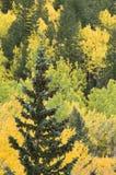 βουνοπλαγιά χρώματος Στοκ φωτογραφία με δικαίωμα ελεύθερης χρήσης