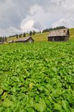 βουνοπλαγιά Στοκ Φωτογραφία
