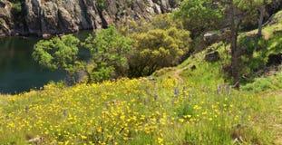 Βουνοπλαγιά που καλύπτεται στις παπαρούνες σε κεντρική Καλιφόρνια Στοκ Εικόνες