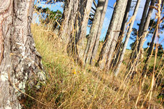 Βουνοπλαγιά στη Νέα Ζηλανδία Στοκ εικόνα με δικαίωμα ελεύθερης χρήσης