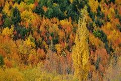 Βουνοπλαγιά φθινοπώρου Στοκ εικόνες με δικαίωμα ελεύθερης χρήσης
