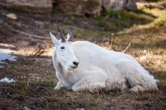 Βουνό αιγών στη φύση Στοκ εικόνες με δικαίωμα ελεύθερης χρήσης