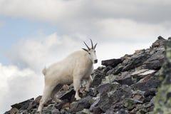 βουνό αιγών Στοκ Φωτογραφίες