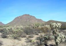 Βουνό Αριζόνα Catback Στοκ Εικόνες