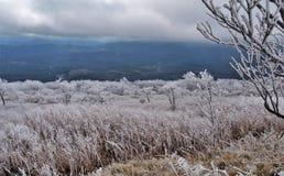 Βουνό Βιρτζίνια Whitetop Στοκ Φωτογραφίες
