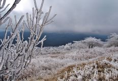 Βουνό Βιρτζίνια Whitetop στοκ εικόνα