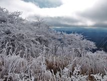 Βουνό Βιρτζίνια Whitetop Στοκ εικόνα με δικαίωμα ελεύθερης χρήσης