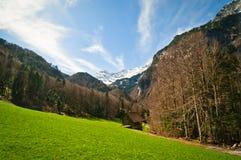 Βουνό και δάσος στοκ φωτογραφίες με δικαίωμα ελεύθερης χρήσης