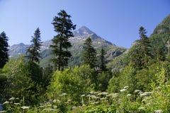 βουνό Καύκασου Στοκ φωτογραφία με δικαίωμα ελεύθερης χρήσης