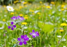 βουνό λιβαδιών λουλουδιών Στοκ Φωτογραφία