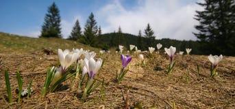 βουνό λουλουδιών Στοκ Εικόνα