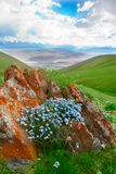 βουνό λουλουδιών Στοκ Φωτογραφίες