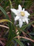 βουνό λουλουδιών Στοκ εικόνες με δικαίωμα ελεύθερης χρήσης