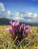 βουνό λουλουδιών Στοκ Εικόνες